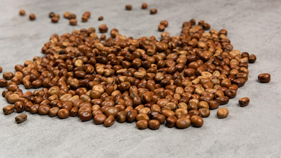 faba beans_webinar